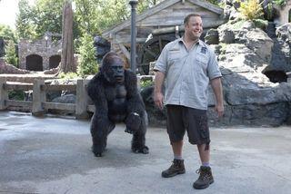 Kevin james gorilla